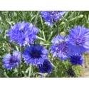 Bleuet fleurs et pétales