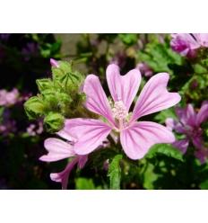Mauve Fleurs